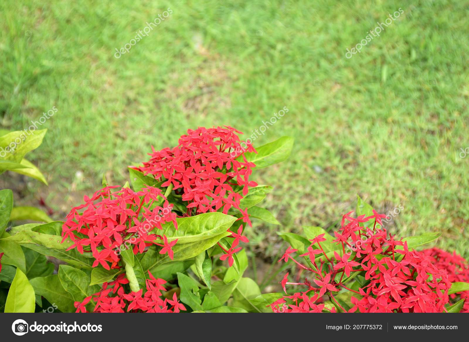 depositphotos stock photo colorful flowers garden flower blooming