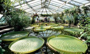 37 Luxus Botanischer Garten Berlin Das Beste Von
