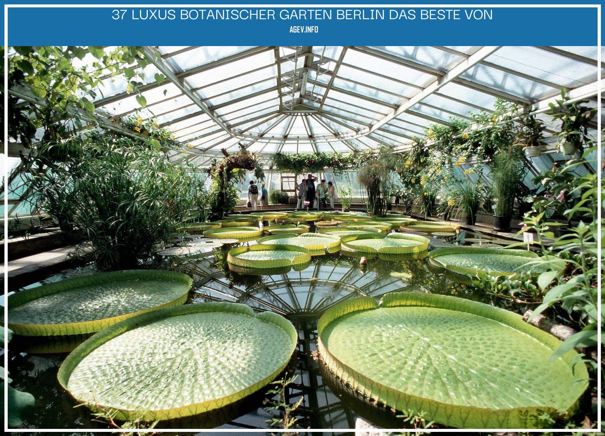 Botanischer Garten Berlin Elegant Berlin Der Botanische Garten Droht Finanziell Auszutrocknen