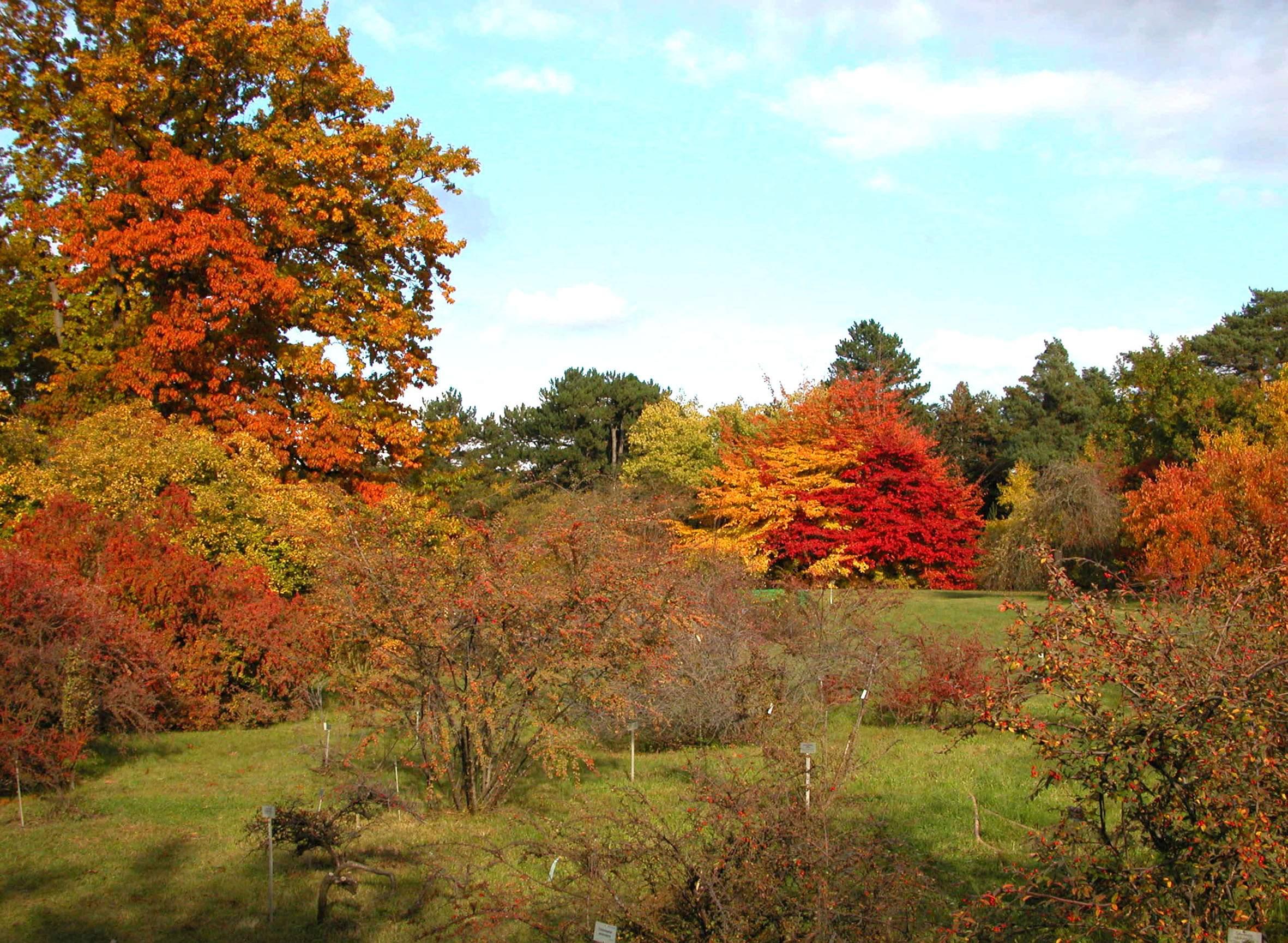 arboretum herbst