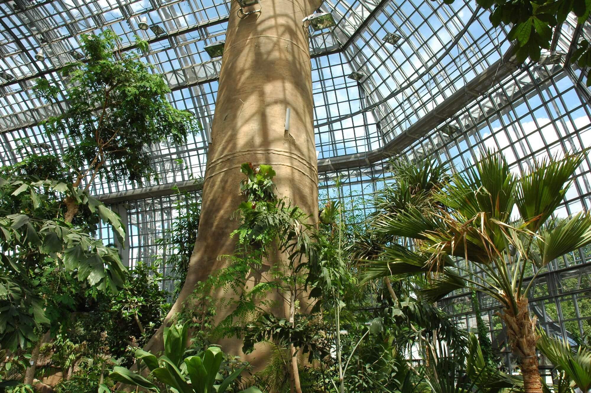 Botanischer garten Grosses Tropenhaus innen