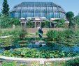 Botanischer Garten Berlin Genial Botanischer Garten Spitzenwissenschaftler sollen Nach