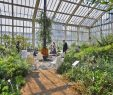 Botanischer Garten Berlin Inspirierend Standesamt Botanischer Garten