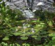 Botanischer Garten Berlin Luxus Victoria ist Zurück Das Victoriahaus ist Wieder Geöffnet