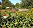 Botanischer Garten Berlin Reizend Arzneipflanzengarten