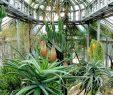 Botanischer Garten Berlin Reizend Botanischer Garten Berlin Ausflug Mit Kind Himbeer