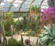Botanischer Garten Berlin Reizend Botanischer Garten Berlin