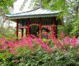 Botanischer Garten Berlin Schön Japan