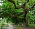 Botanischer Garten Bonn Einzigartig Botanischer Garten Bonn Stadtparks Bonn