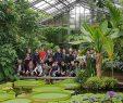 Botanischer Garten Bonn Einzigartig Pflanzenevolution Zum Anfassen – Bio Exkursionen In