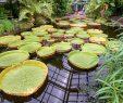 Botanischer Garten Bonn Elegant Botanischer Garten Bonn Fotos Botanischer Garten