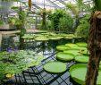 Botanischer Garten Bonn Elegant File 2018 06 18 Bonn Meckenheimer Allee 169 Botanischer