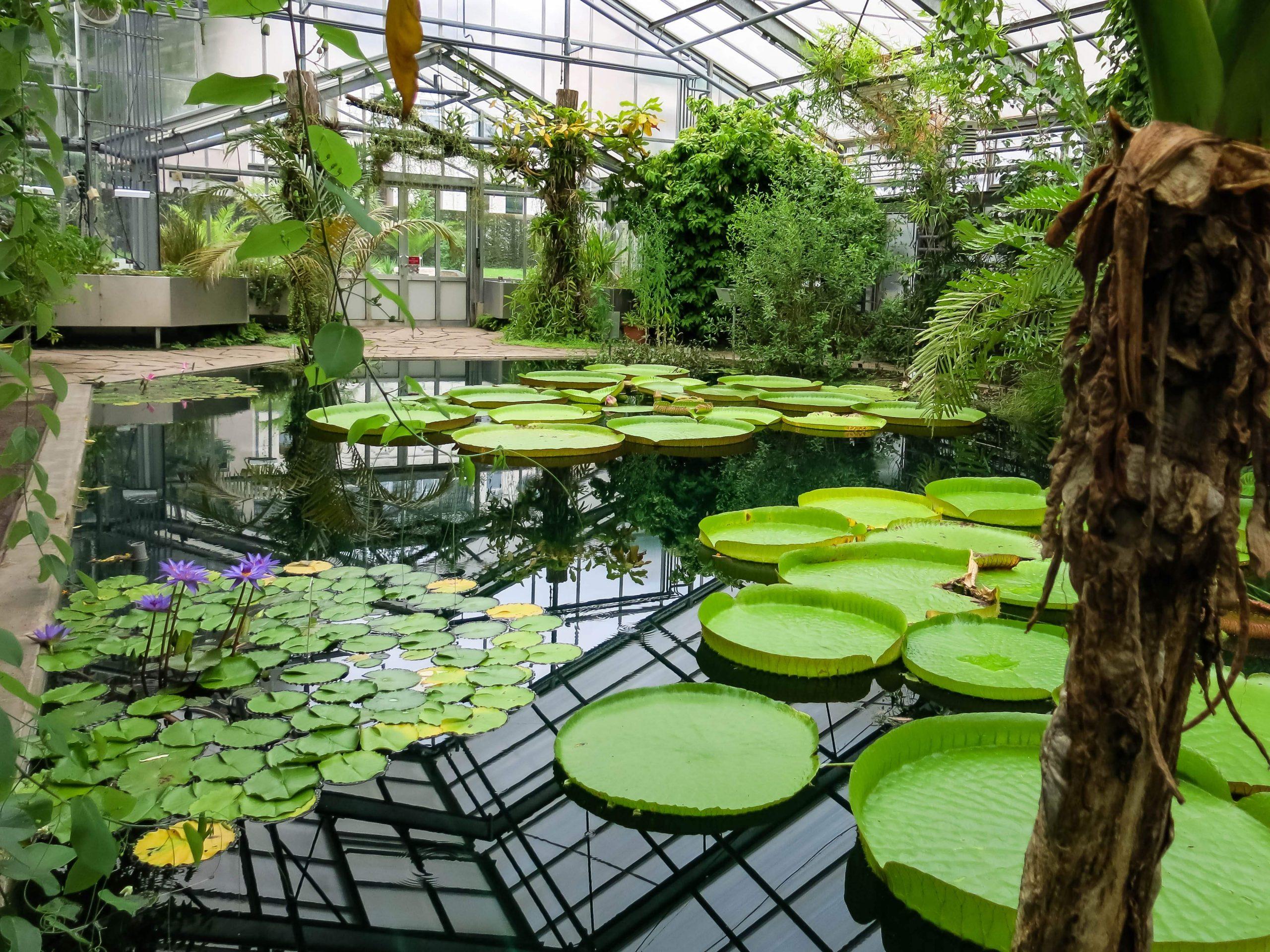 File 2018 06 18 bonn meckenheimer allee 169 botanischer garten victoriahaus 09