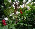 Botanischer Garten Bonn Frisch Botanischer Garten Bonn Stadtparks Bonn