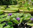 Botanischer Garten Bonn Frisch Botanischer Garten In Bonn