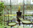 Botanischer Garten Bonn Inspirierend Uni Kiel Dickes Osterei – Titanwurz Geht Im Botanischen