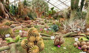 46 Schön Botanischer Garten Bonn Einzigartig