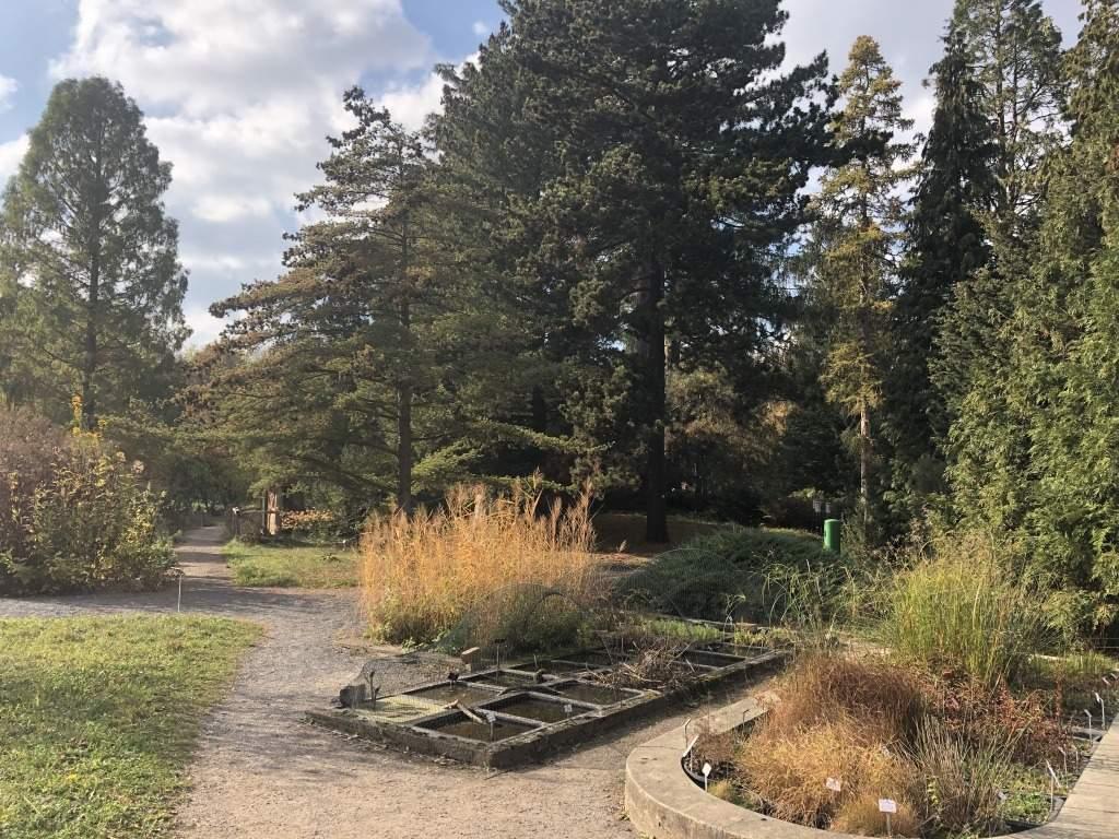 Botanischer Garten Dresden Einzigartig Botanischer Garten Dresden ⋠Flip
