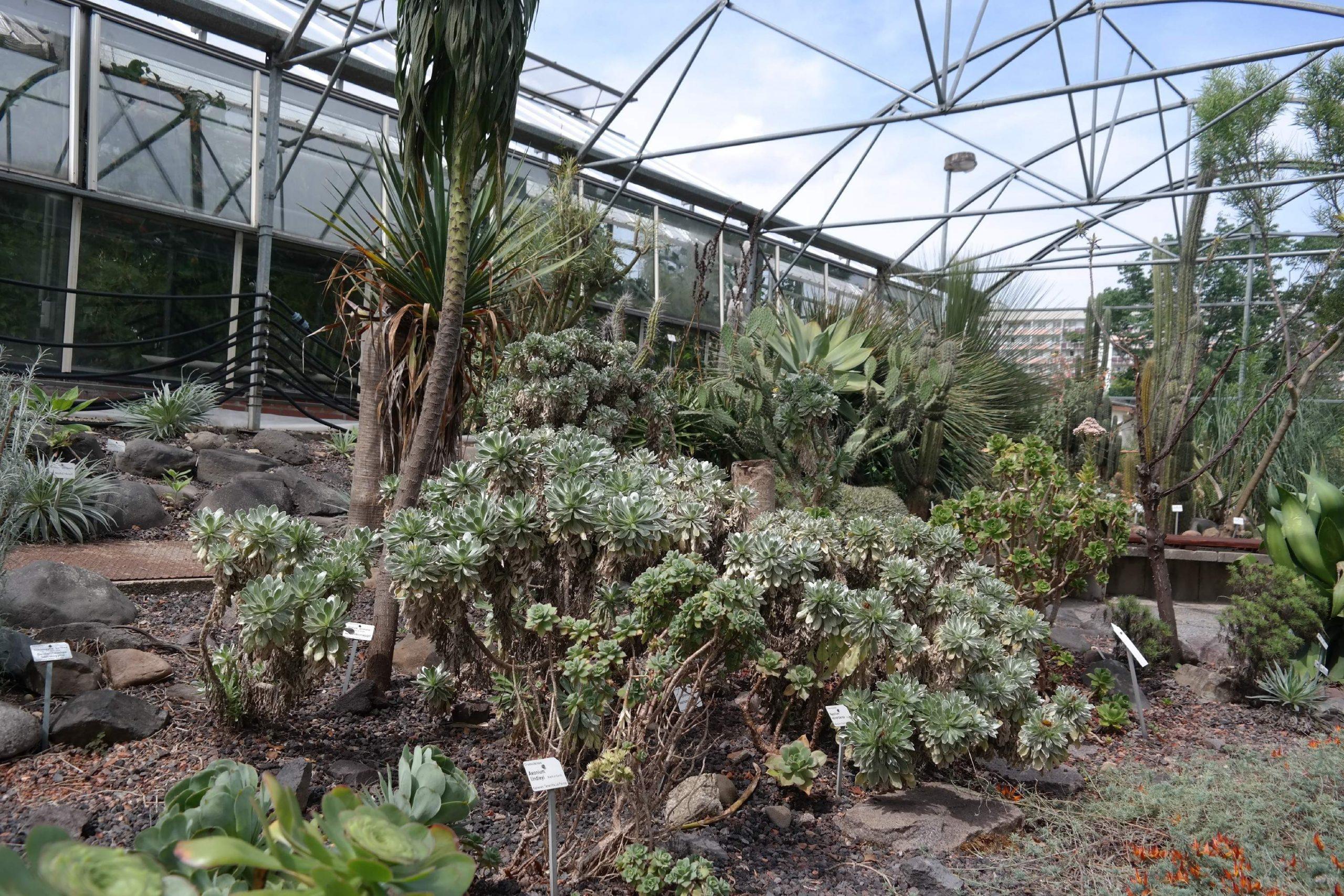 botanischer garten dresden 6