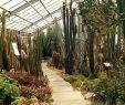Botanischer Garten Dresden Elegant Botanischer Garten Der Technischen Universität Dresden so