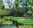 Botanischer Garten Dresden Elegant sommerfest Im Botanischen Garten