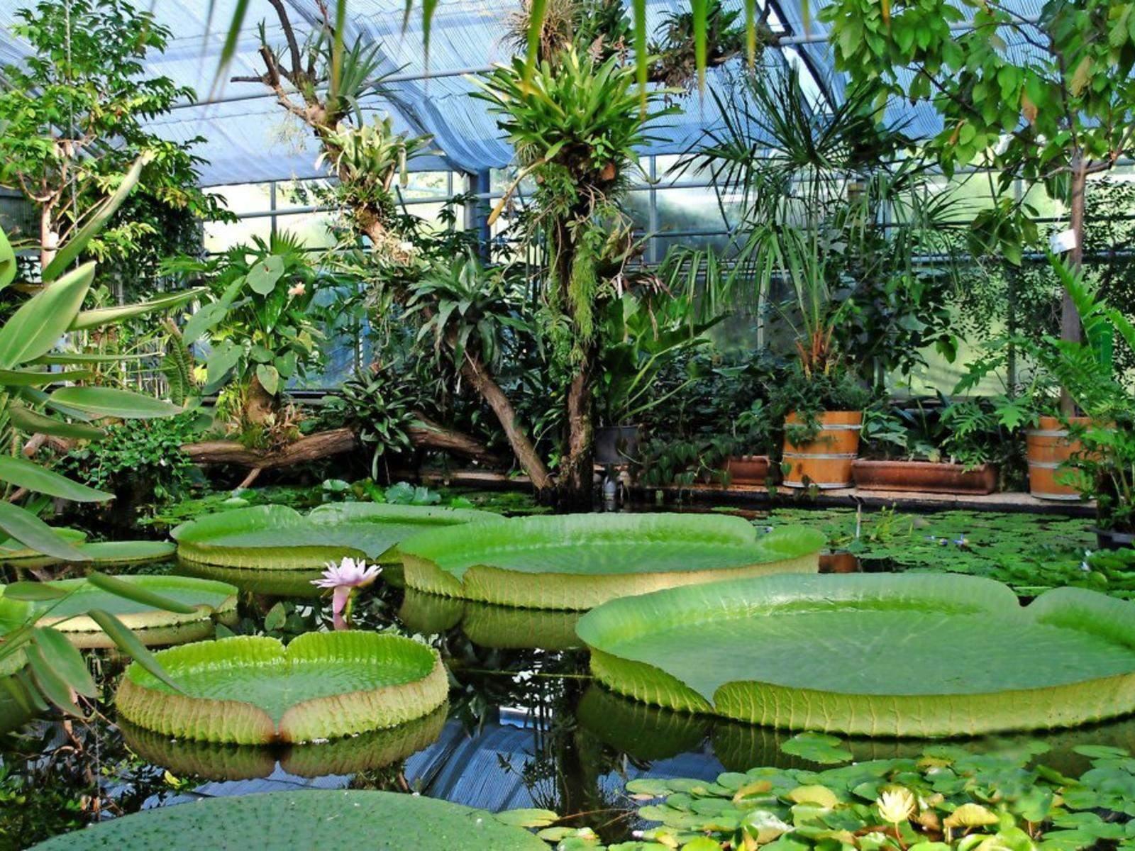 Sommerfest im Botanischen Garten reference 4 3