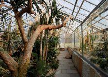 38 Reizend Botanischer Garten Dresden Inspirierend