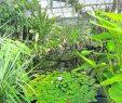 Botanischer Garten Dresden Inspirierend Neues Gewächshaus Für Den Botanischen Garten Dresden – Dawo