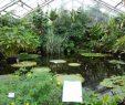 Botanischer Garten Dresden Luxus Bilder Botanischer Garten Dresden Reisetipps