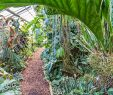 Botanischer Garten Dresden Luxus Botanischer Garten Mainz Botanischer Garten