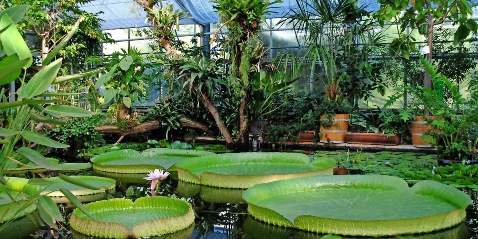 Botanischer Garten Dresden Neu sommerfest Im Botanischen Garten