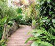 Botanischer Garten Dresden Schön forschung Und Vergnügen Botanischer Garten Dresden top