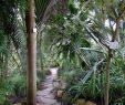 Botanischer Garten Hamburg Das Beste Von Loki Schmidt Garten Botanischer Garten Hamburg On Twitter