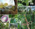 Botanischer Garten Hamburg Elegant Loki Schmidt Garten Botanischer Garten Hamburg على تويتر