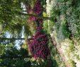 Botanischer Garten Hamburg Inspirierend ➤ Botanischer Garten Der Universität Hamburg Loki Schmidt