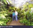 Botanischer Garten Hamburg Inspirierend Alten Botanischen Garten Hamburg Deutschland Stockfoto Bild