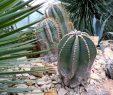 Botanischer Garten Hamburg Inspirierend Botanischer Garten Hamburg Wellness & Mehr