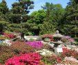 Botanischer Garten Hamburg Inspirierend Bürgerschaft Stärkt Den Loki Schmidt Garten Botanischen