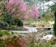 Botanischer Garten Hamburg Inspirierend Sup Hamburg Graboffsky Botanischer Garten Klein Flottbek