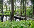 Botanischer Garten Hamburg Luxus Botanischer Garten Hamburg Blue Planet Traveller