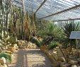 Botanischer Garten Hamburg Reizend Ein Kleinod In Hamburgs Westen ist Definitiv Der Loki