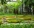 Botanischer Garten Marburg Das Beste Von Aufdenlahnbergen Hashtag On Twitter
