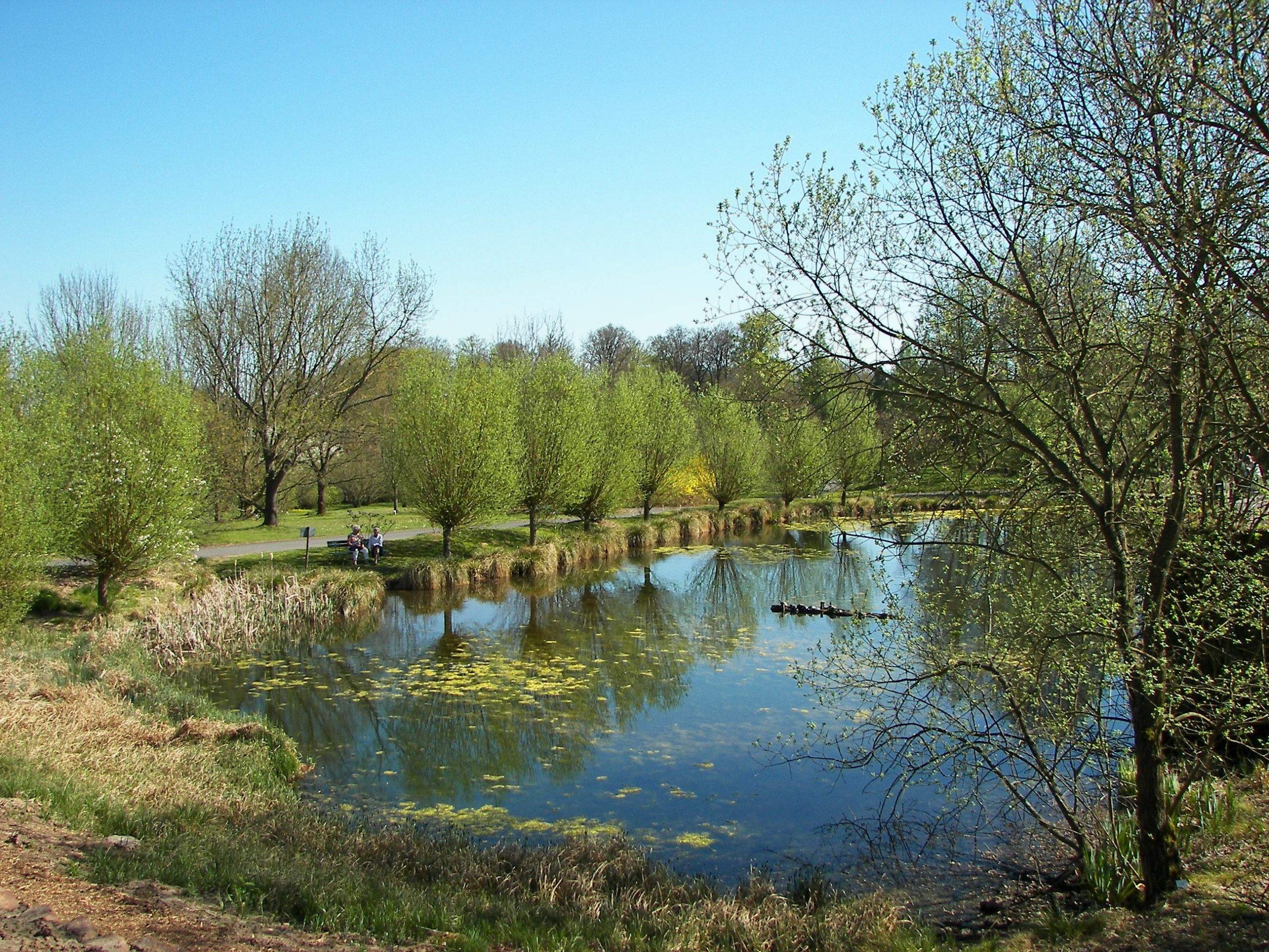 Neuer Botanischer Garten Teich 002
