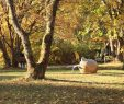 Botanischer Garten Marburg Einzigartig Arnika Hessen Kunstpfad