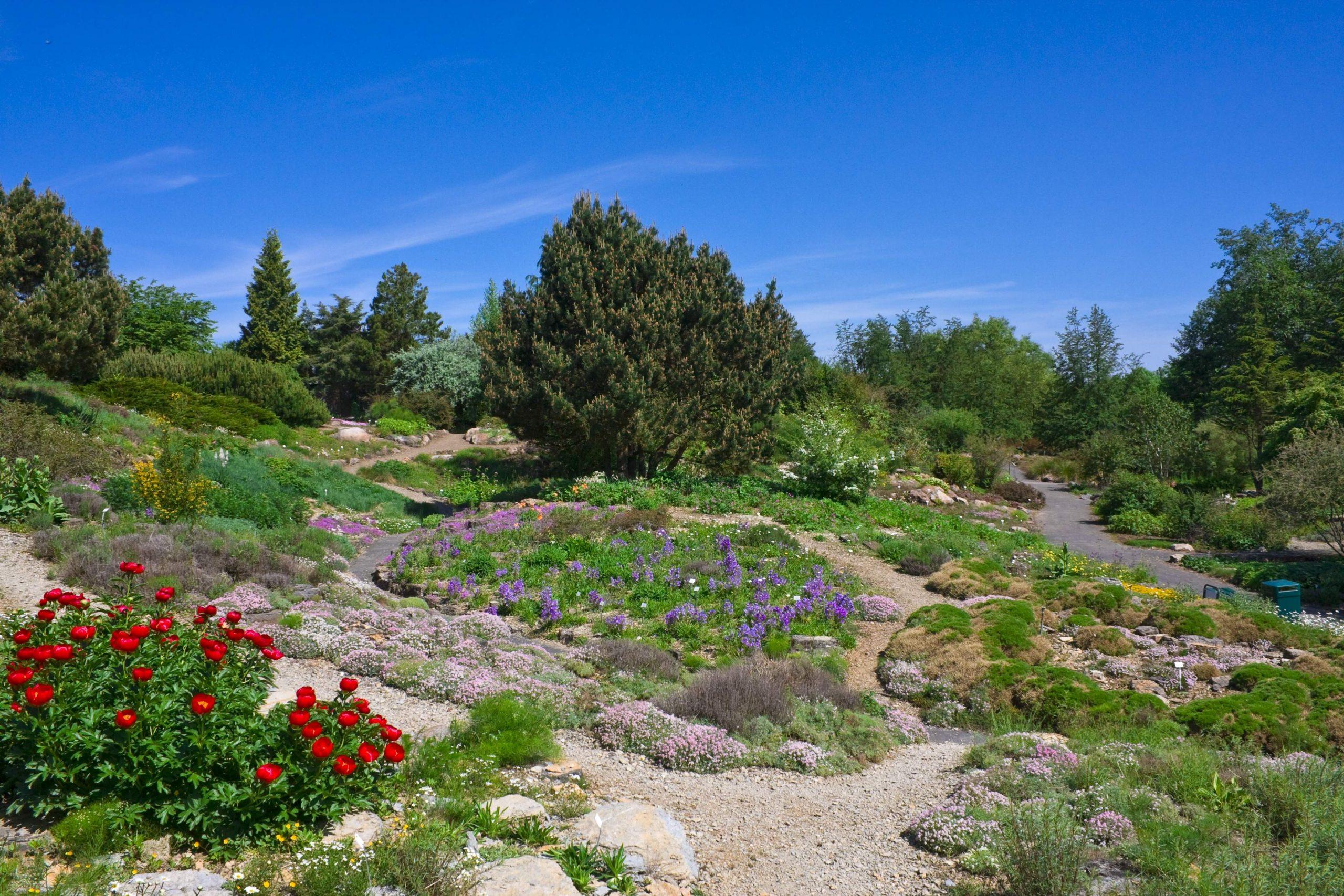 Neuer Botanischer Garten Alpinum 004