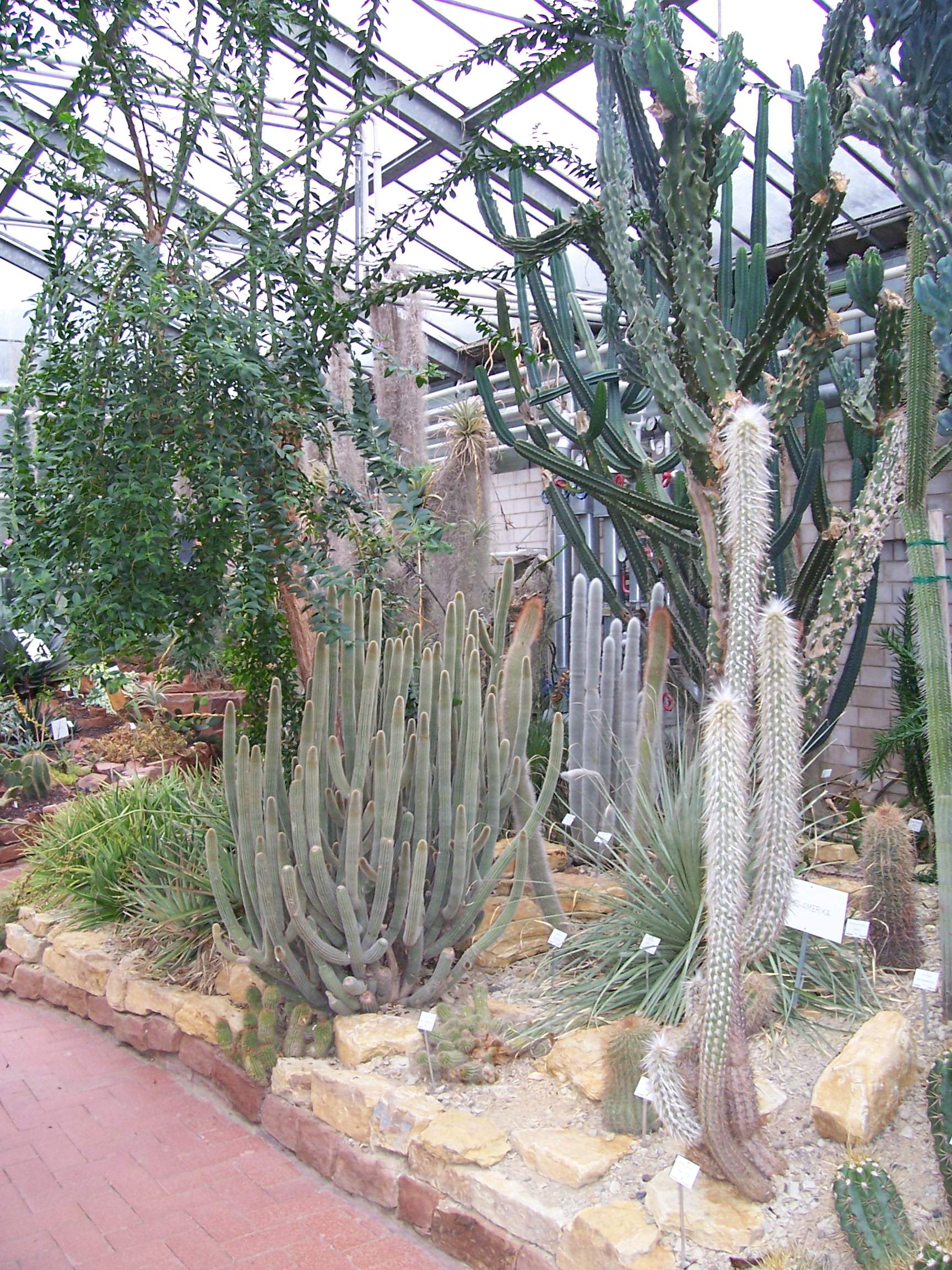 Datei Neuer Botanischer Garten Marburg Sukkulentenhaus 001