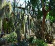 Botanischer Garten Marburg Frisch Ausflug In Den Botanischen Garten In Marburg