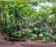 Botanischer Garten Marburg Genial Botanischer Garten Marburg Gewächshäuser Botanischer Garten