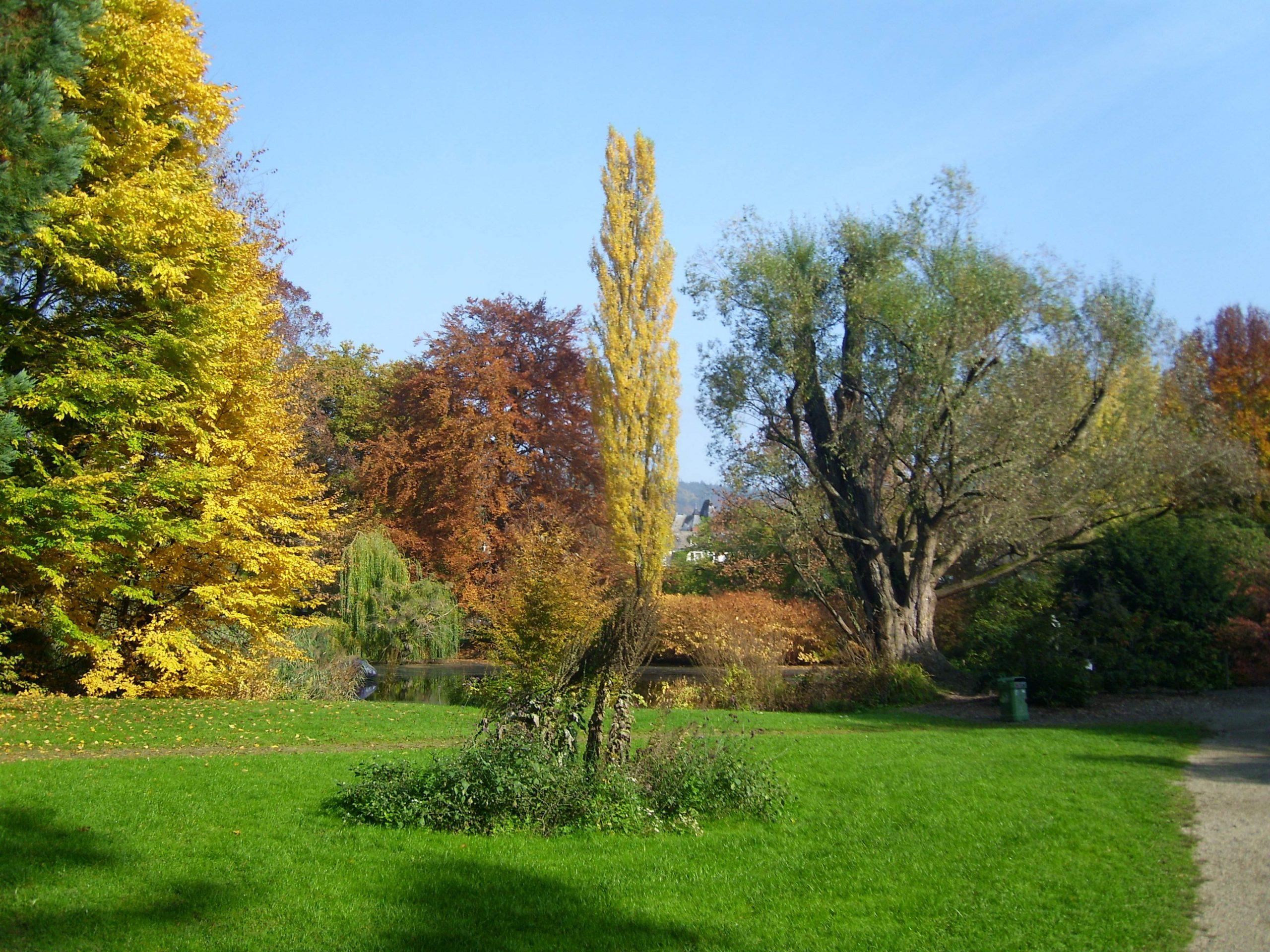 Datei Silberweide im Alten Botanischen Garten Marburg Elop
