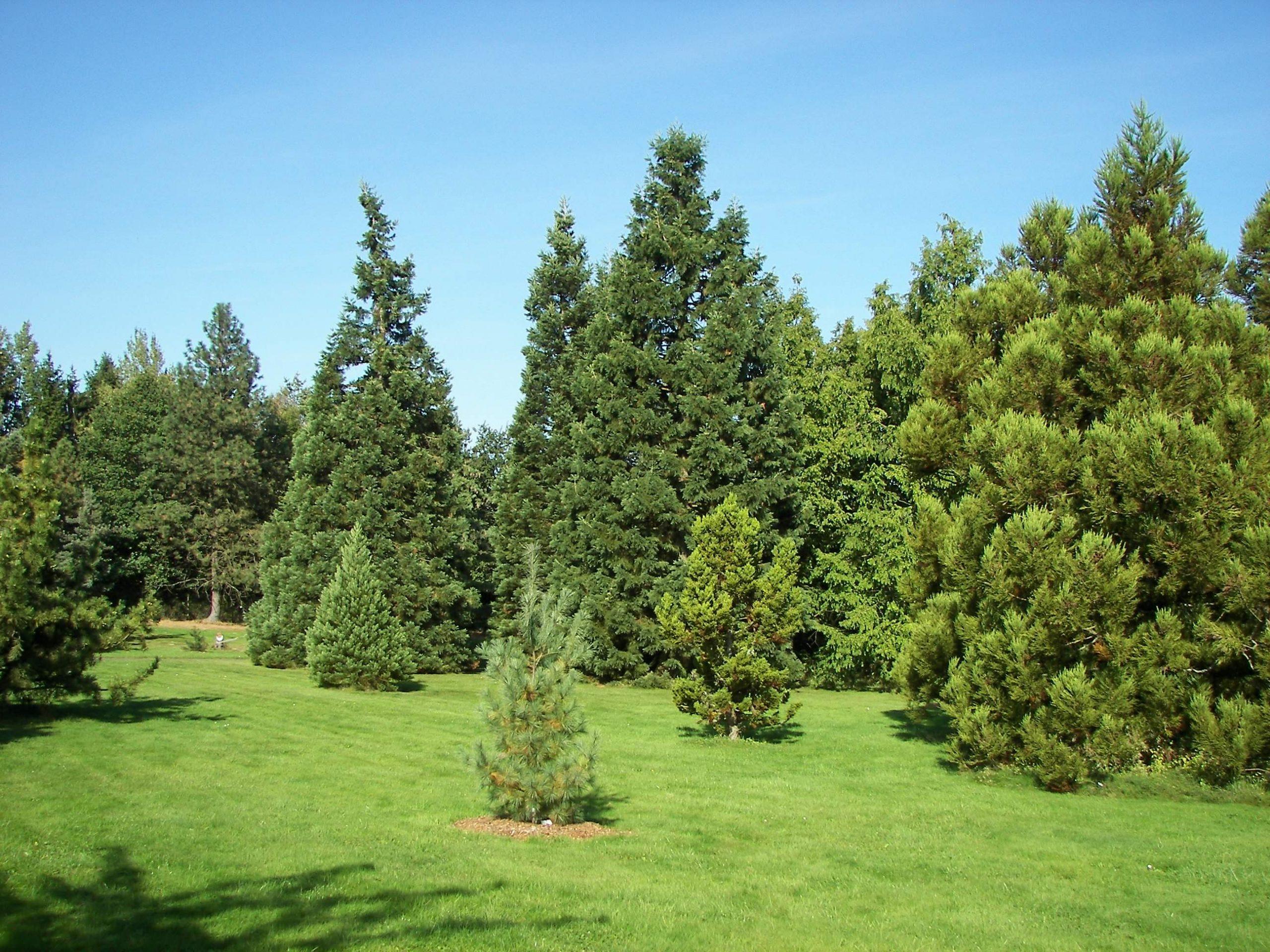 Neuer Botanischer Garten Pinetum 002